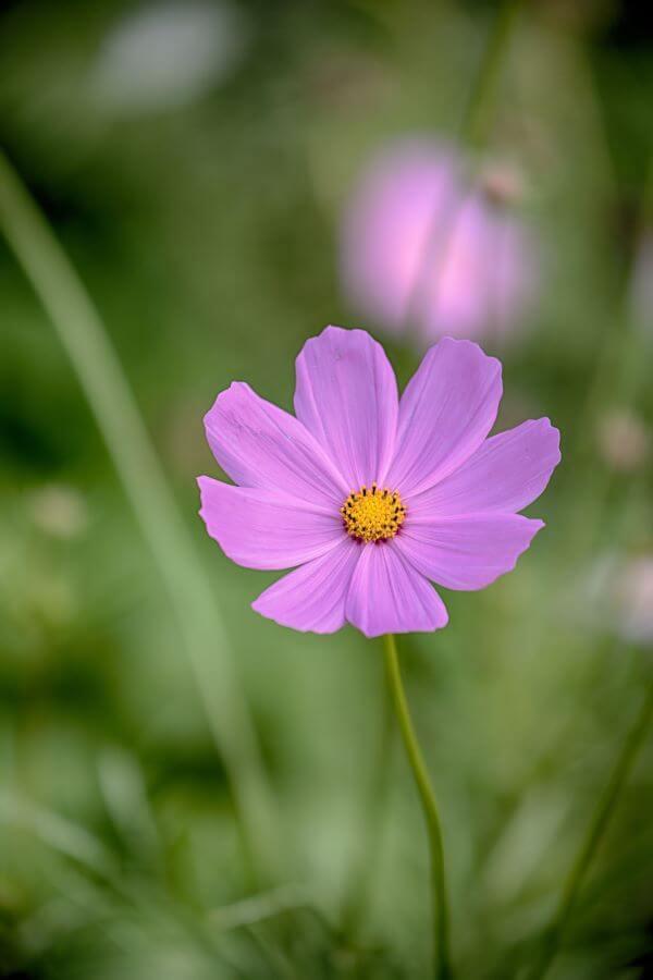 Flor roxa no jardim moderno