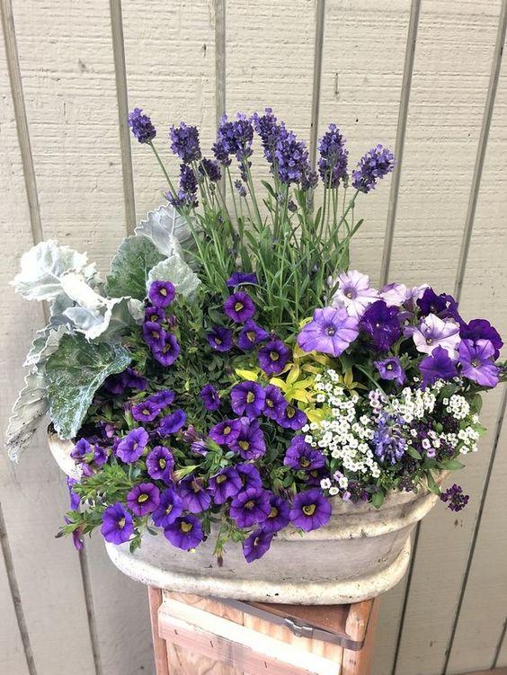 Flor roxa no vaso decorativo de casa