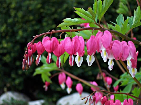 Essa é uma das flores exóticas mais bonitas