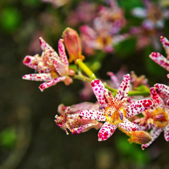 Aposte nas flores exóticas para decorar seu jardim