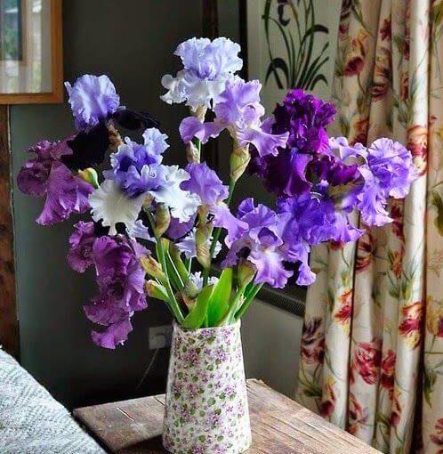 Flor Roxa: Tipos de Flores, Significado e +45 Ideias de Arranjos Lindos