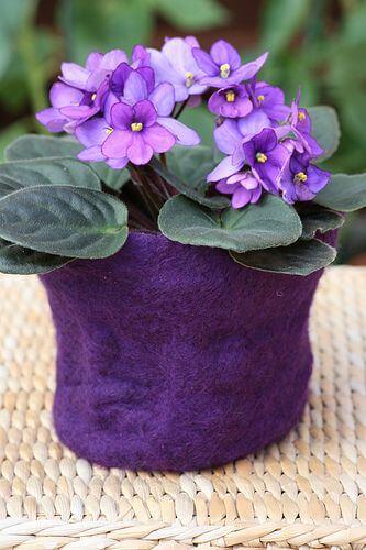 Vaso flor roxa violeta