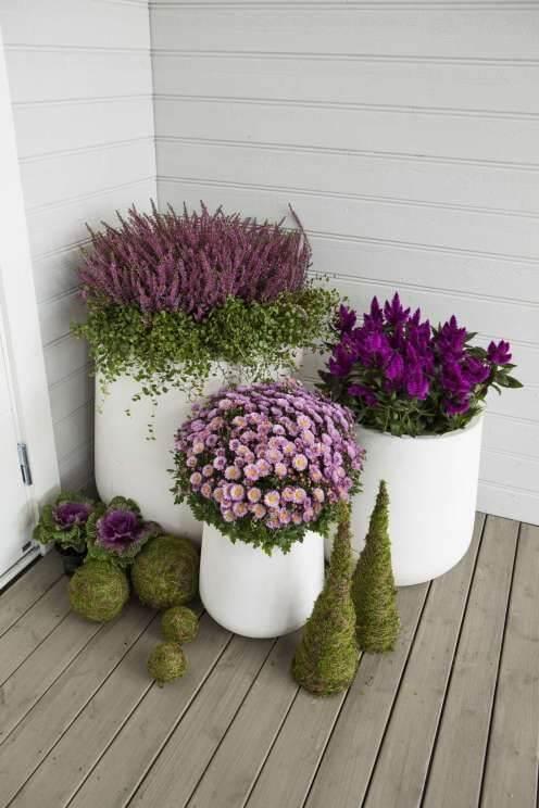 Vasos de flores roxas na varanda de casa