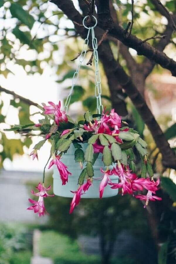 A flor de maio é uma das flores para vasos suspensos