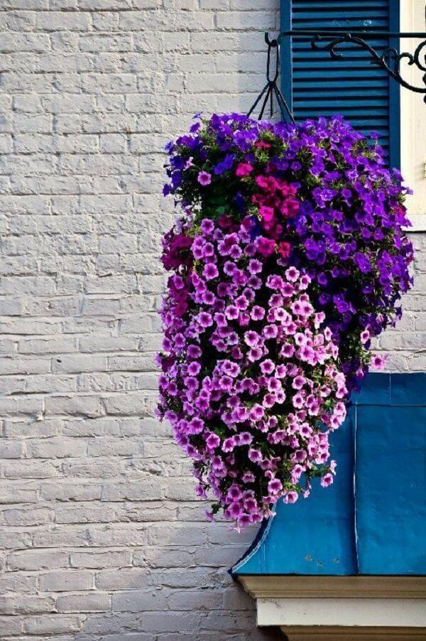 As petúnias são flores perfeitas para vasos suspensos
