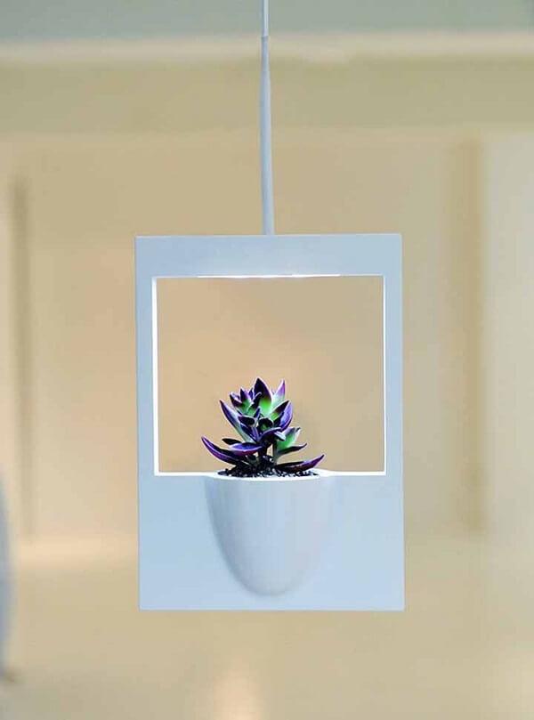 Cultive suas suculentas em vasos para jardim suspenso