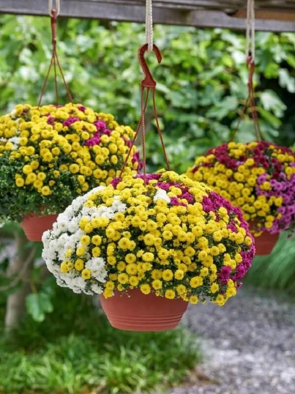 Mescle tonalidades de flores para vasos suspensos