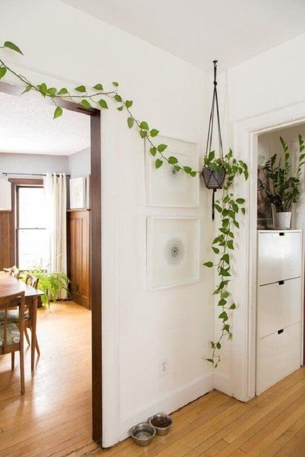 Vaso de planta suspenso com a planta jiboia