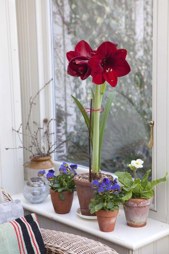 Vaso de flor vermelha na janela de casa