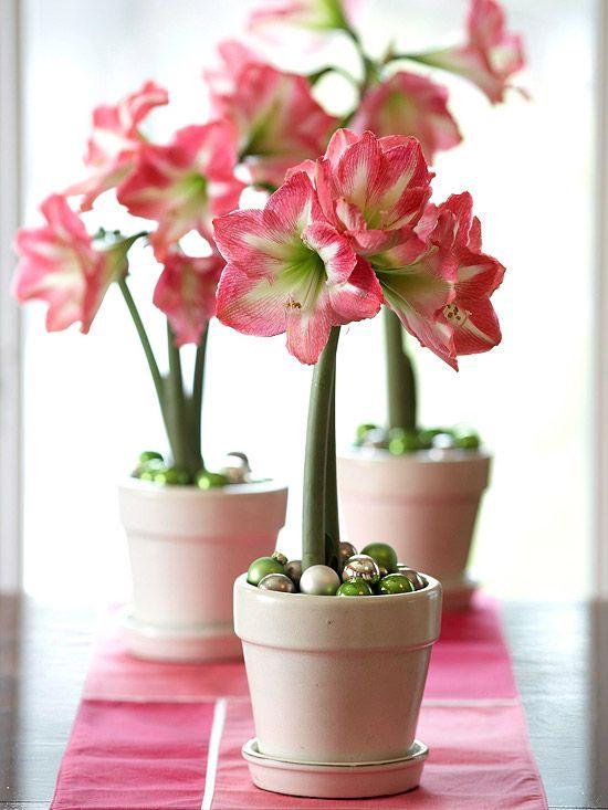 Vasos de amarilis rosa e branco